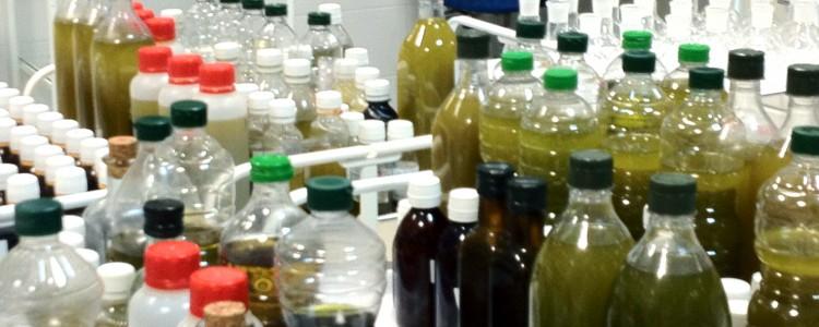 """¿Si los aceiteS de oliva son varios porqué nos referimos a ellos en """"singular""""?"""