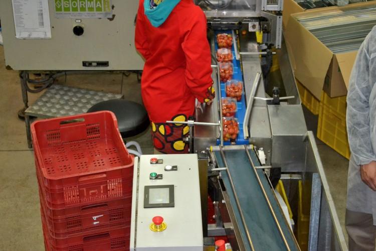 Visión del envasado de tomates en las instalaciones de La Palma S.C.A.