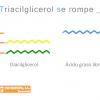 Triacilglicerol se rompe