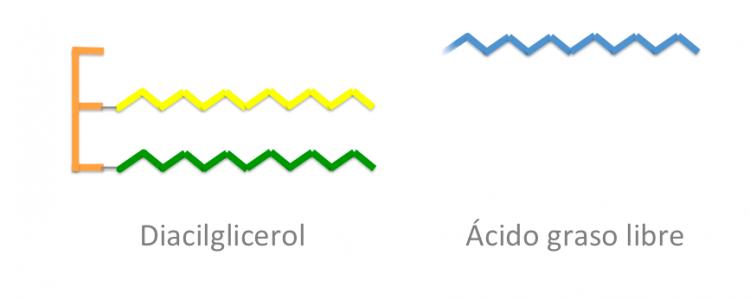 """¿Qué es la """"acidez"""" de un aceite?"""
